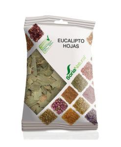 hojas de eucalipto en herbolario aravaca